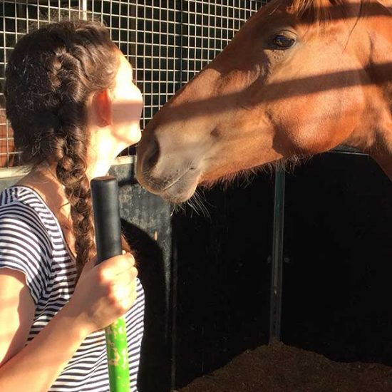 Arbeit mit Pferden