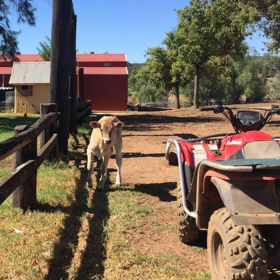 Ranch in Queensland