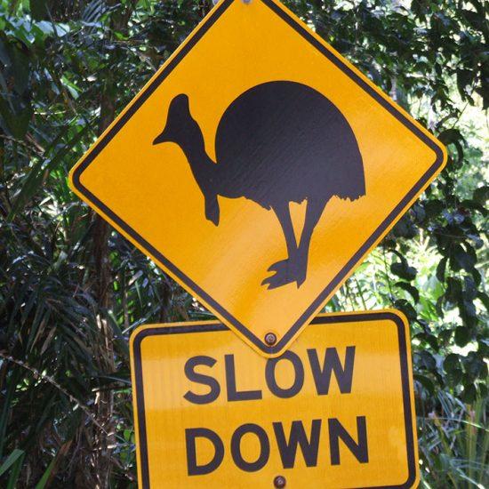 Emu-Schild