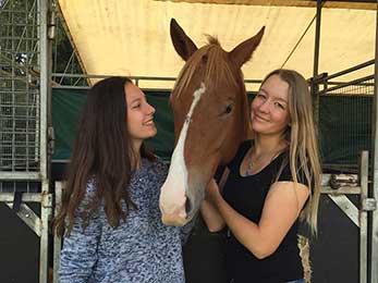 Jobs mit Pferden